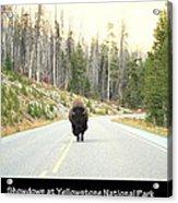 Showdown At Yellowstone Acrylic Print