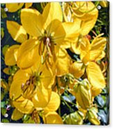 Shower Tree 9 Acrylic Print