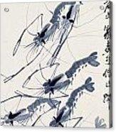 Shrimp Intriguing Acrylic Print