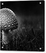 Shroom Acrylic Print
