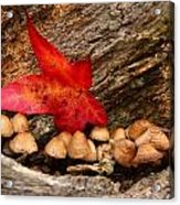 Shrooms Acrylic Print by Jacqui Collett