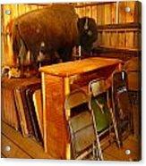 Shy Buffalo Acrylic Print