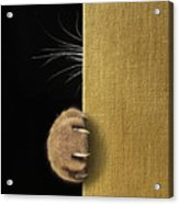 Shy Cat ... Acrylic Print