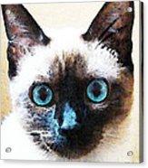 Siamese Cat Art - Black And Tan Acrylic Print by Sharon Cummings