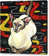Siamese Cat On A Cushion Acrylic Print