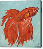 Siamese Fighting Fish Acrylic Print by Michael Creese