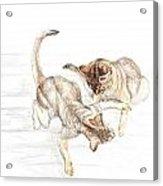 Siamese Like Cats Acrylic Print