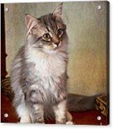 Siberian Forest Kitten II Acrylic Print