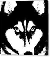 Siberian Husky Acrylic Print