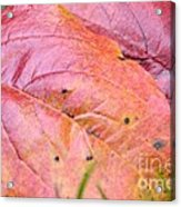 Side By Side They Fall Acrylic Print