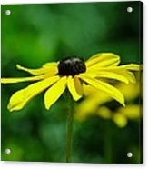 Side View Of A Yellow Flower Acrylic Print