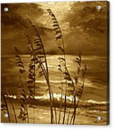 Sienna Moonlight Acrylic Print
