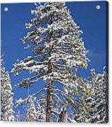 Sierra Snow Acrylic Print