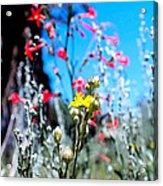 Sierra Wild Flowers II Acrylic Print