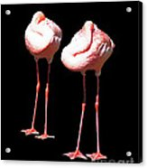 Siesta In Pink Acrylic Print