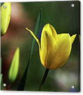 Signs Of Spring II Acrylic Print