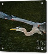 Silence In The Wings Acrylic Print