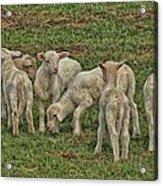 Silence Of The Lambs Acrylic Print