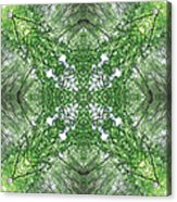 England Silent Forest One Acrylic Print