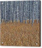Silent Sentinels Of Autumn Grasses Acrylic Print