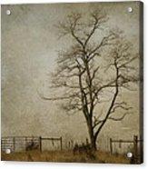 Silent Solitude Acrylic Print