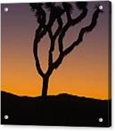 Silhouette Of A Joshua Tree At Sunset Acrylic Print