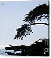 Silhouette Of Monterey Cypress Tree Acrylic Print