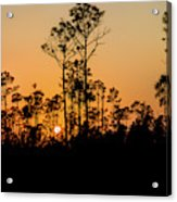 Silhouette Of Trees At Sunset Acrylic Print