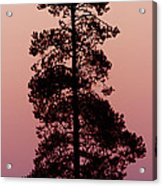 Silhouette Tree At Sunrise Acrylic Print