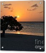 Silhouetted Divi Divi Tree Acrylic Print