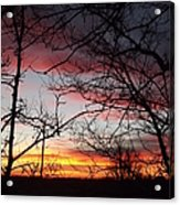 Silhouetted Acrylic Print