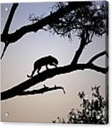 Silhouetted Leopard Acrylic Print