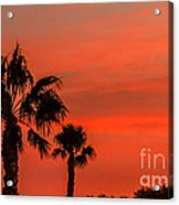 Silhouetted Palm Trees Acrylic Print