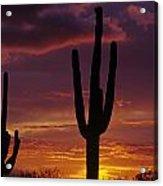 Silhouetted Saguaro Cactus Sunset  Arizona State Usa Acrylic Print