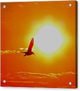 Silhouetted Seagull  Acrylic Print