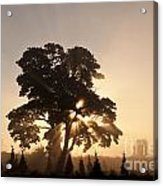 Silhouetted Tree With Sun Rays Acrylic Print