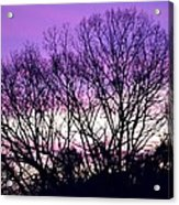 Silhouettes Against Pink Skies Acrylic Print