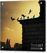Silhouettes Of The Cormorants Acrylic Print