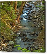 Silky Stream In Rain Forest Landscape Art Prints Acrylic Print