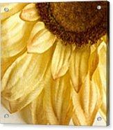 Silky Sun Acrylic Print