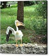 Silly Bird Acrylic Print