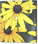 Silly Susans Spider Acrylic Print