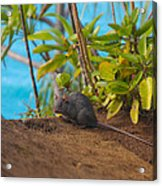 Silver Eyed Mouse Acrylic Print by Sarah Crites