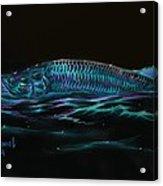 Silver Flash Acrylic Print
