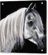 Grey Arabian Mare Painting Acrylic Print