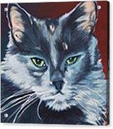 Silver Grey Cat Portrait Acrylic Print