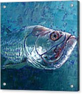 Silver King Tarpon Acrylic Print by Pam Talley