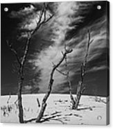 Silver Lake Dune With Dead Trees And Cirrus Clouds In Black And White Acrylic Print