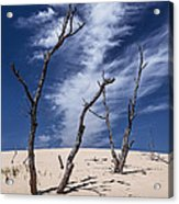 Silver Lake Dune With Dead Trees And Cirrus Clouds Acrylic Print