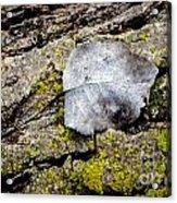 Silver Leaf Acrylic Print